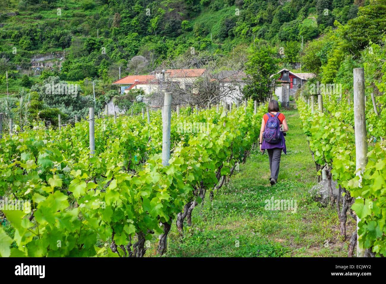 Il Portogallo, l'isola di Madeira, Vigna di Arco de Sao Jorge sulla costa nord Immagini Stock