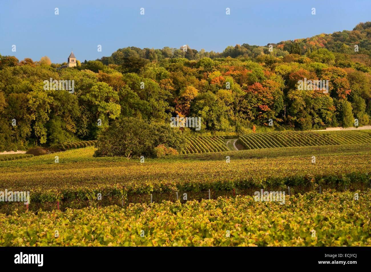 Francia, Marne, parco regionale delle Montagne de Reims, Villers Allerand campanile di una chiesa e di vigneti champagne Immagini Stock