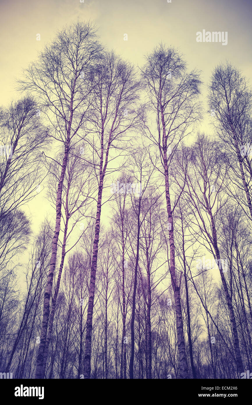 Guardando in alto attraverso gli alberi, retrò sfondo filtrato. Immagini Stock