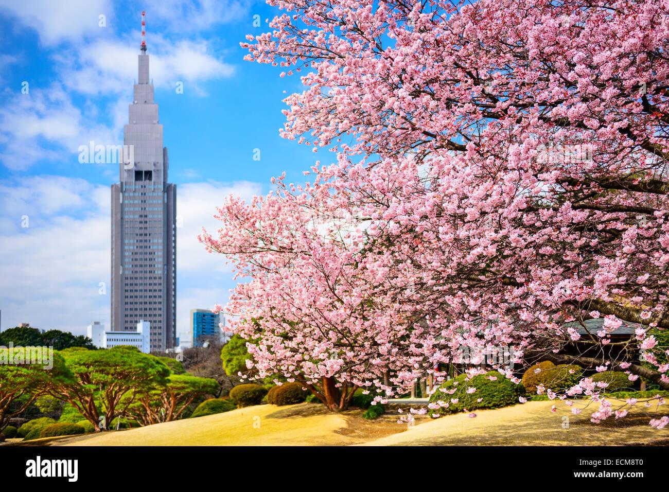 Tokyo, Giappone primavera a Shinjuku Gyoen Park. Immagini Stock