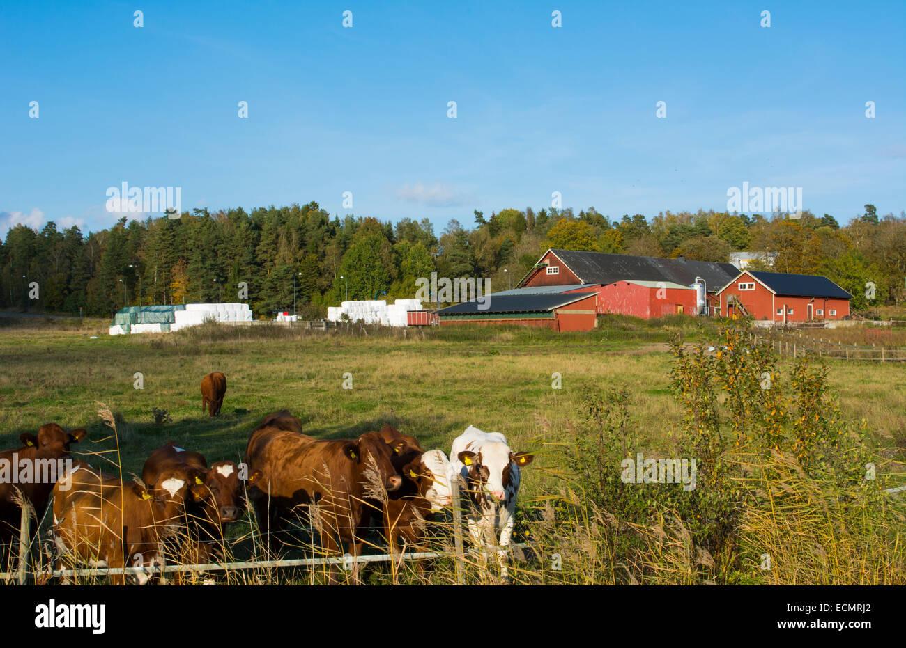 Sorunda Svezia bellissima azienda casearia e fienile a sud di Stoccolma Foto Stock