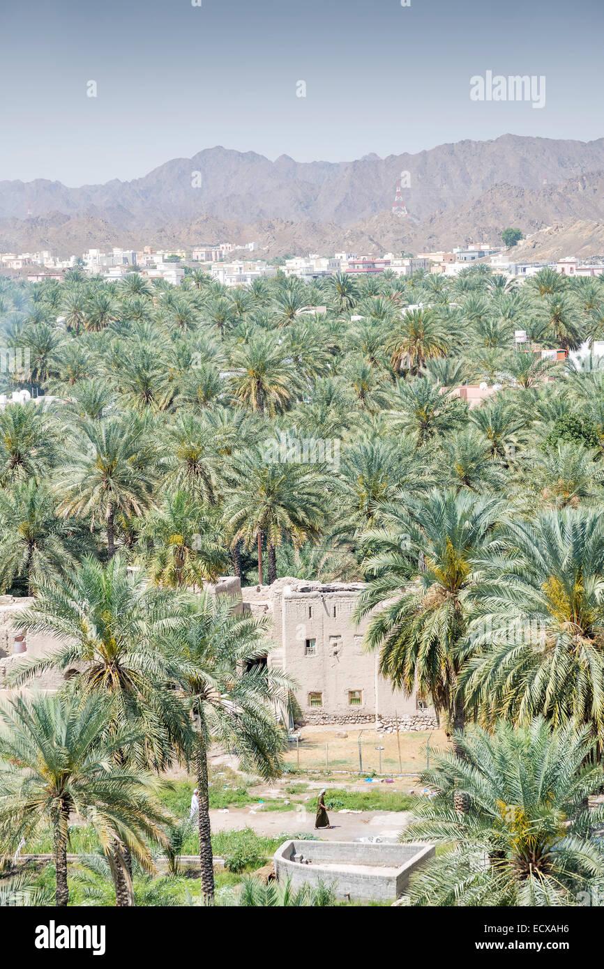 Vista da fort di edifici e palme della città Nizwa, Oman Immagini Stock