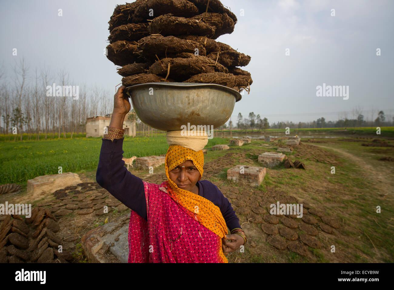 Le donne indiane il prelievo di sterco secco, Uttar Pradesh, India Immagini Stock