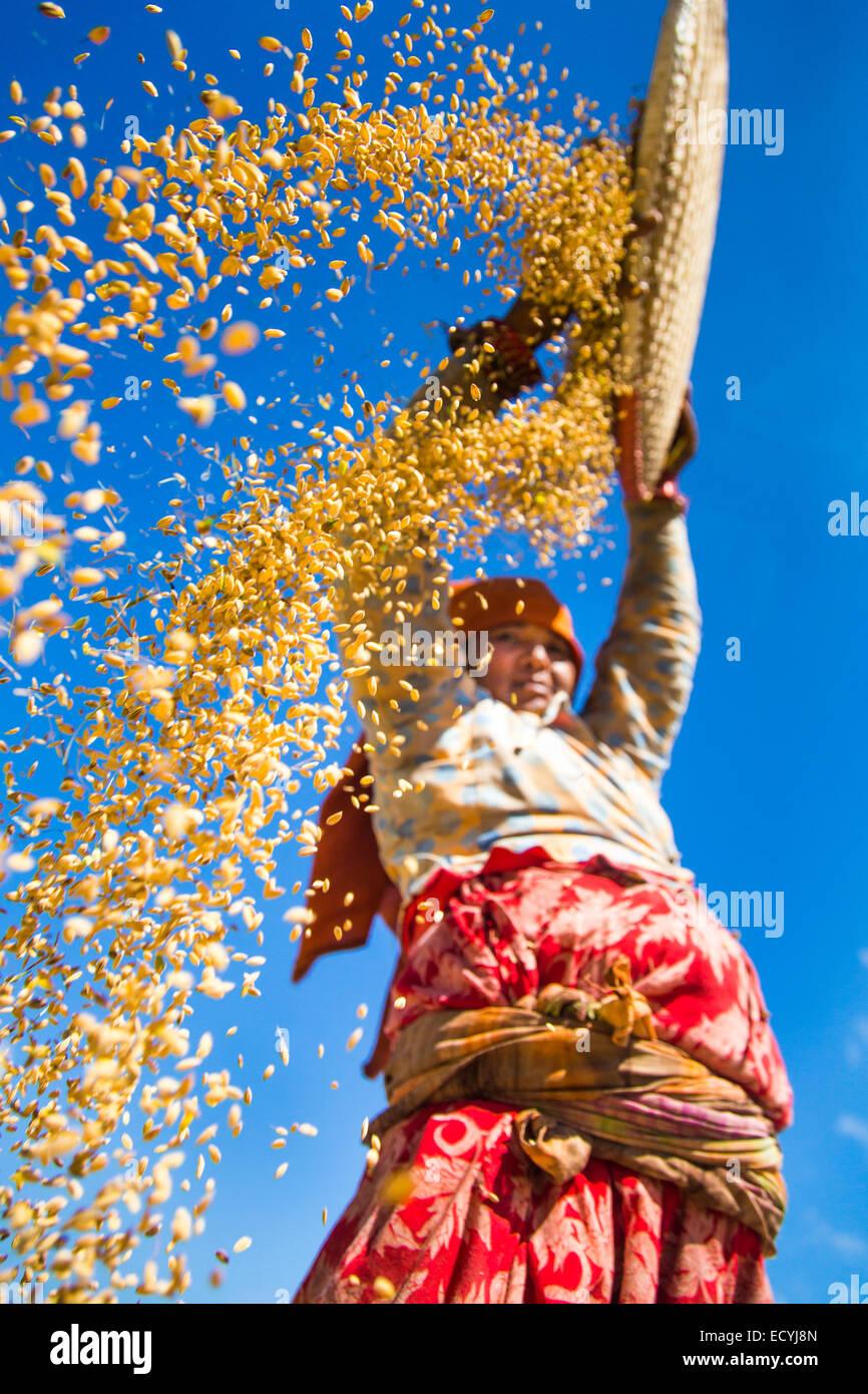 Agricoltore setacciatura di grano vicino a Kathmandu, Nepal Immagini Stock