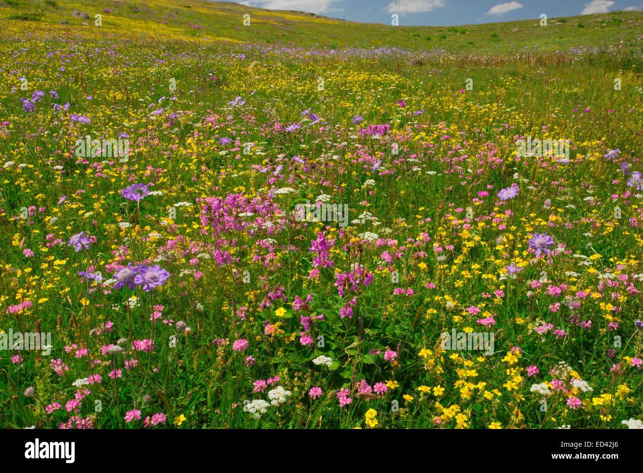 Spettacolarmente praterie fiorite a circa 6500 piedi (2000 m) sulla camma passa, a nord-est della Turchia Foto Stock