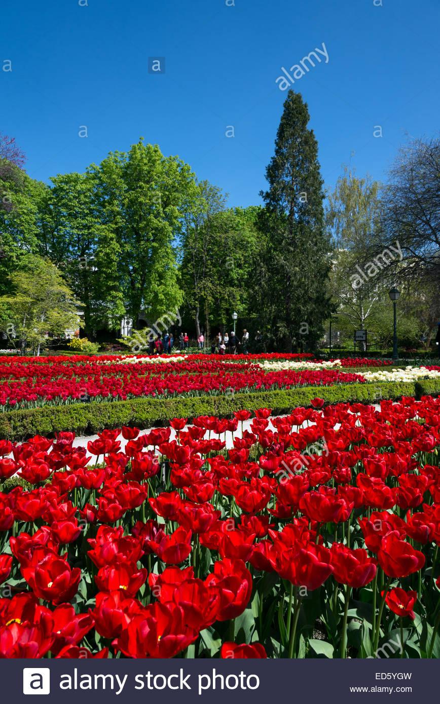 Tulipani rossi nella Royal Botanical Gardens, Madrid, Spagna Immagini Stock