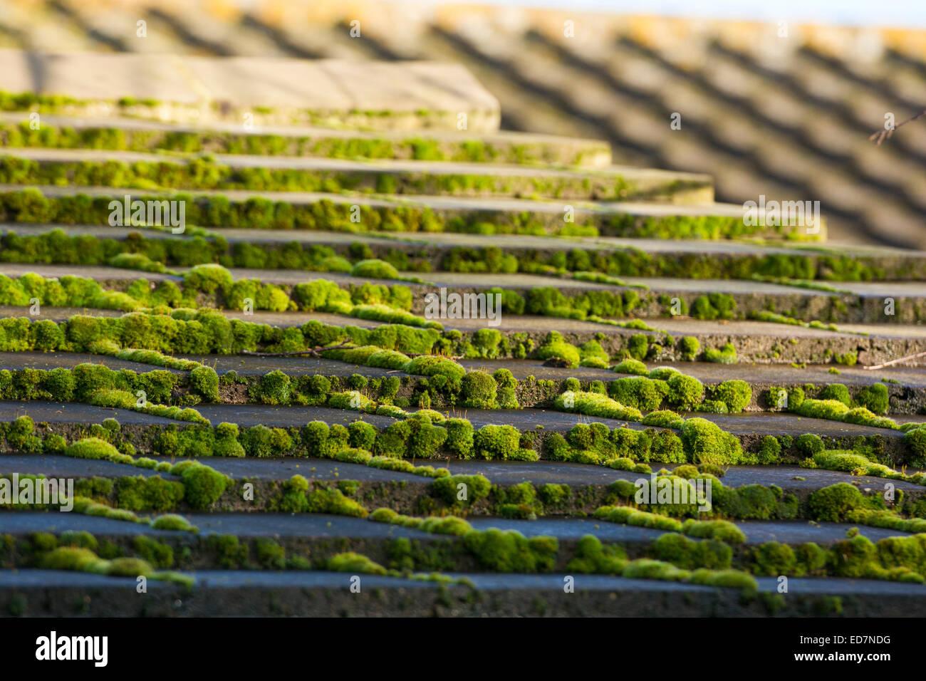 Il muschio verde sulla moderna piastrelle di calcestruzzo tegole