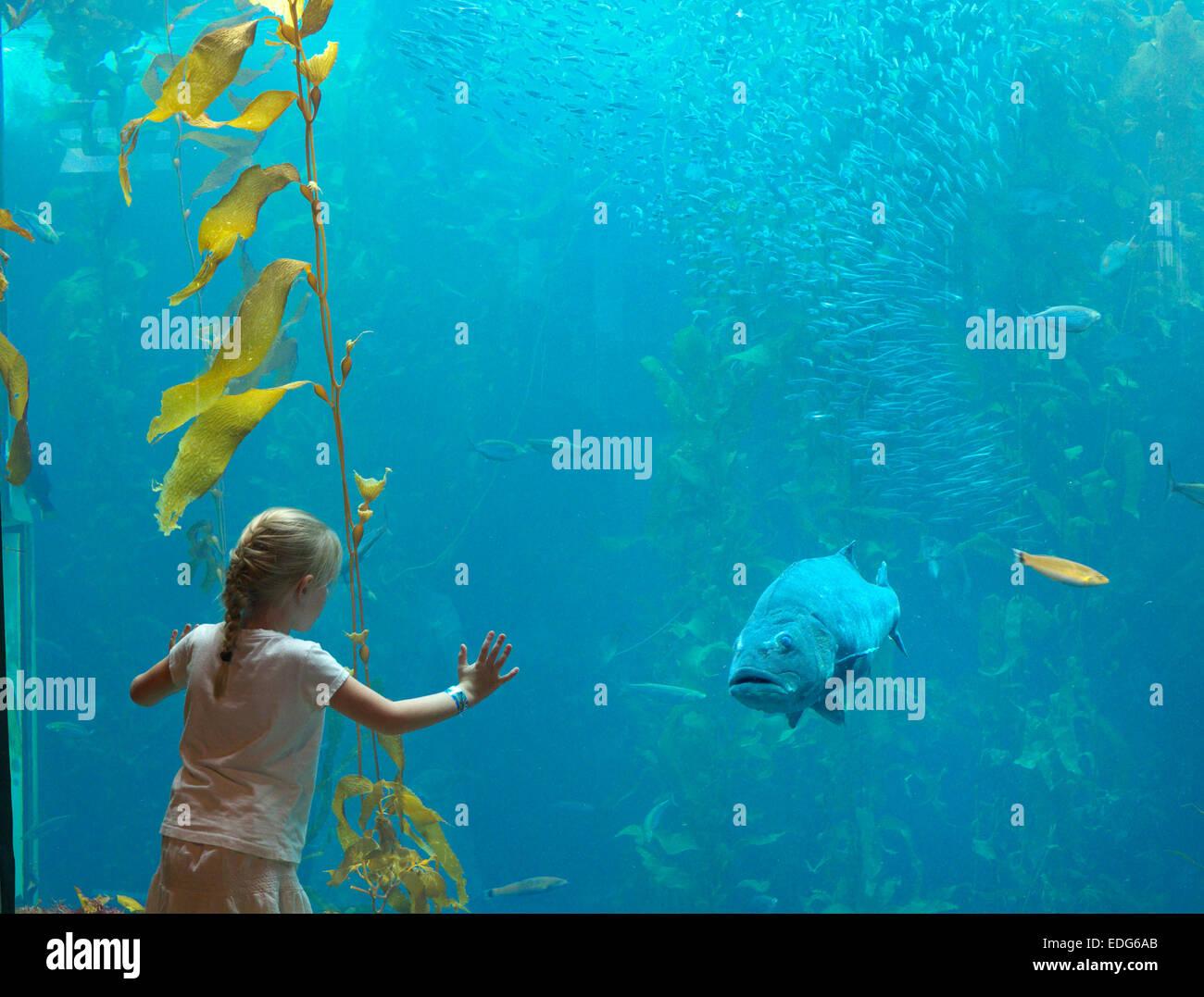 Giovane ragazza bionda e grandi blu Groper pesce ' La Bella e la Bestia ' guardare attentamente in ogni Immagini Stock