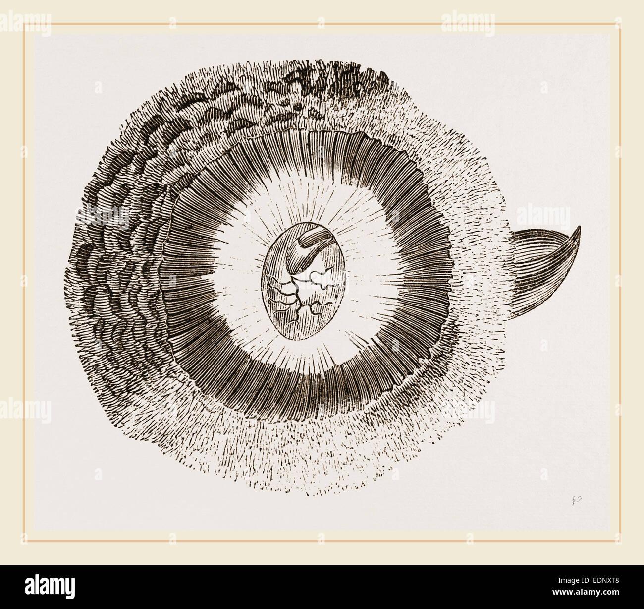 Orecchio Esterno del gufo Immagini Stock