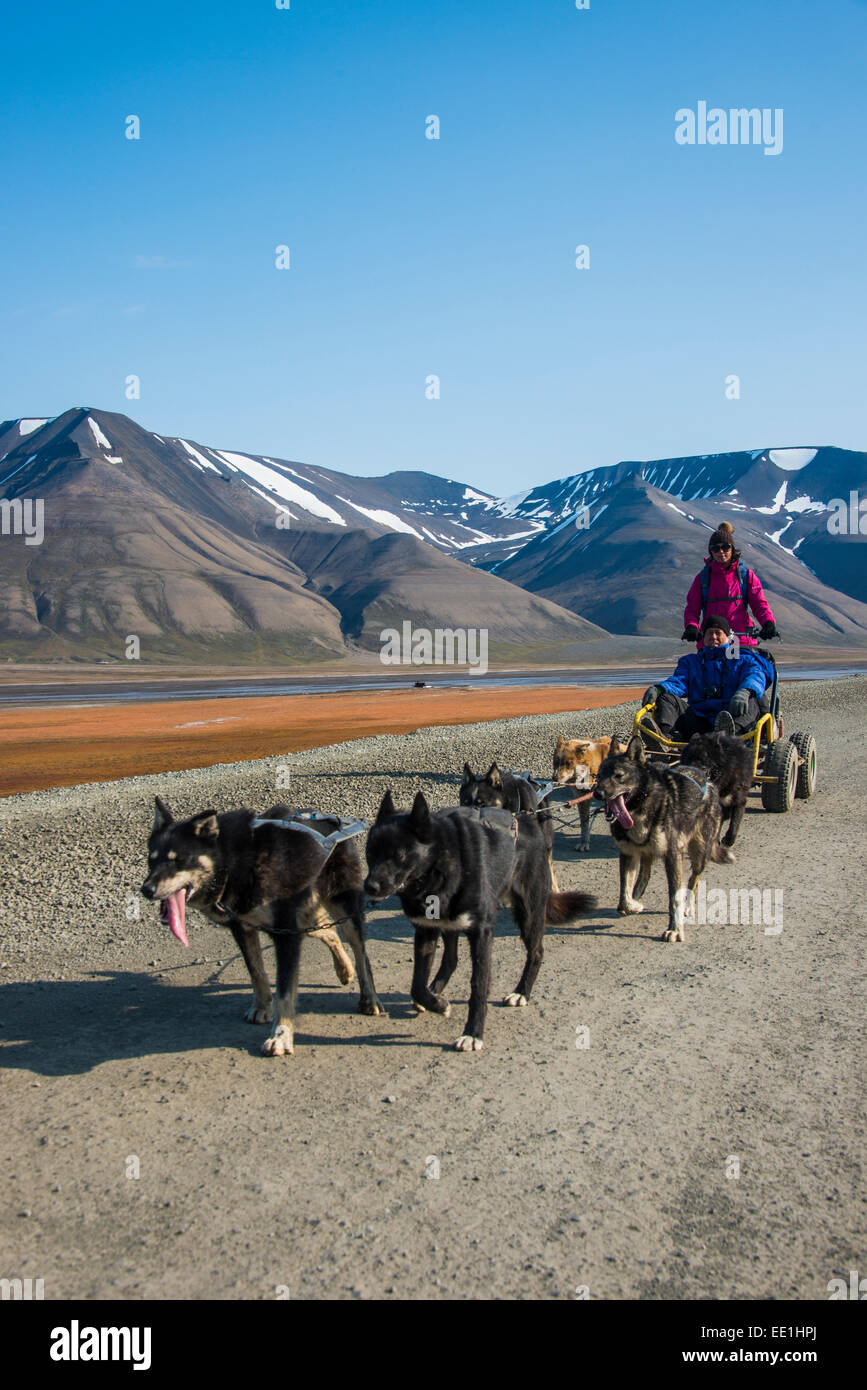 Husky sleddog su ruote, Svalbard Longyearbyen, Norvegia, Scandinavia, Europa Immagini Stock