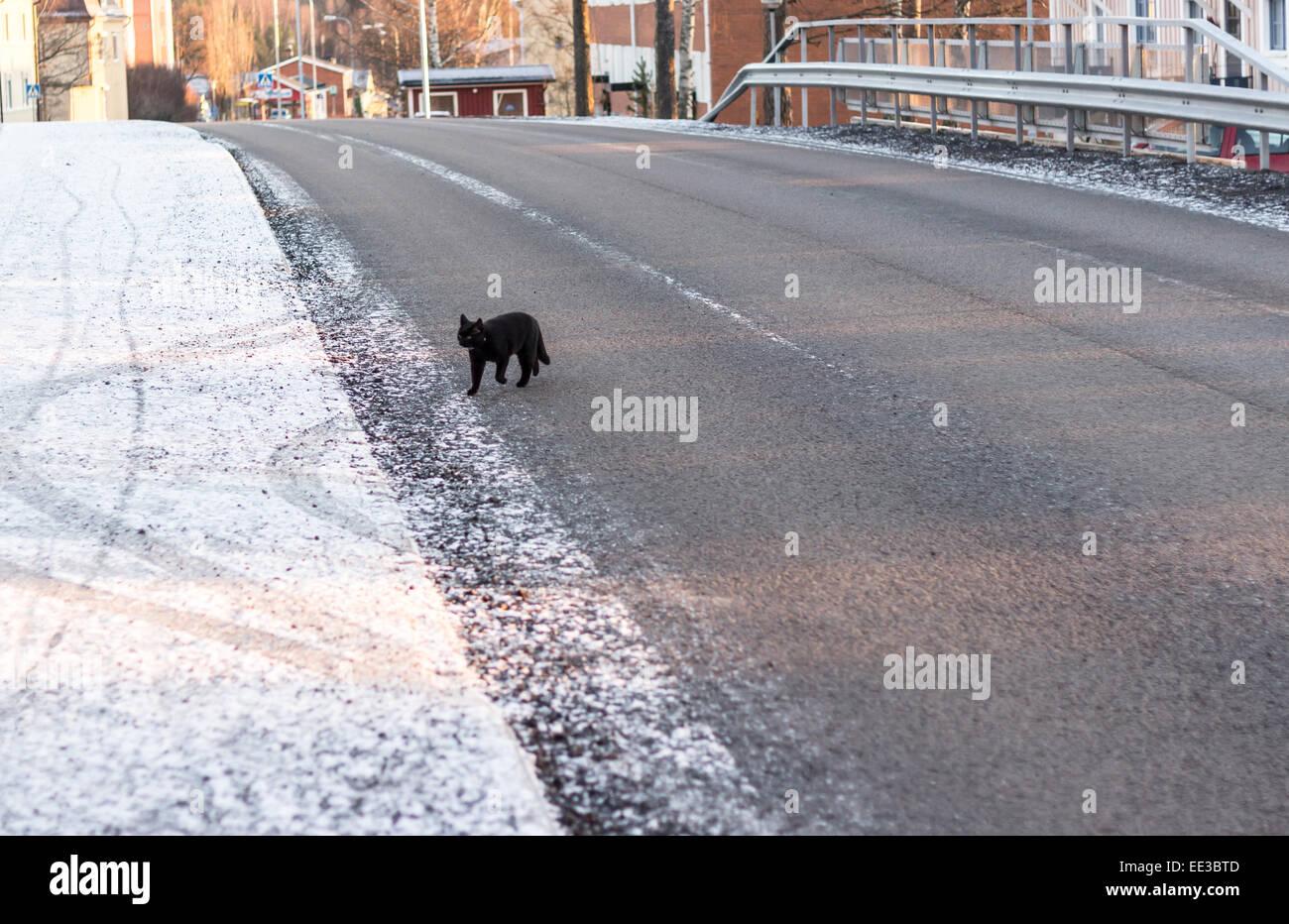 Gatto Nero Attraversamento Strada In Inverno Foto Immagine Stock