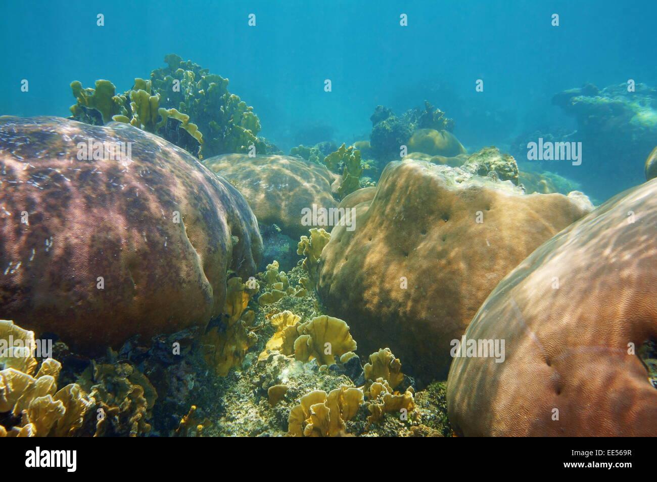 Paesaggio sottomarino in un stony Coral reef del Mar dei Caraibi Immagini Stock