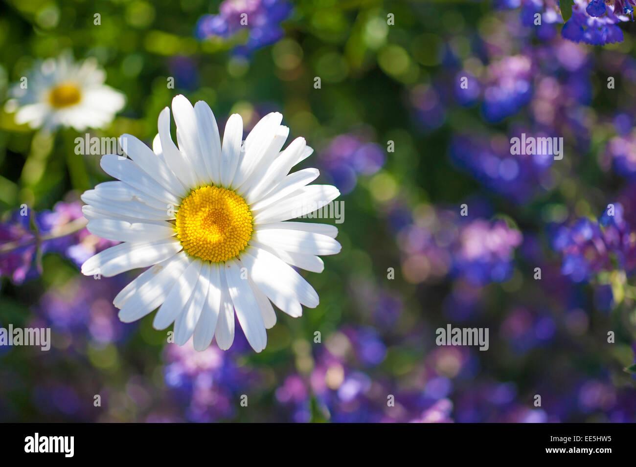 In prossimità dei fiori Immagini Stock