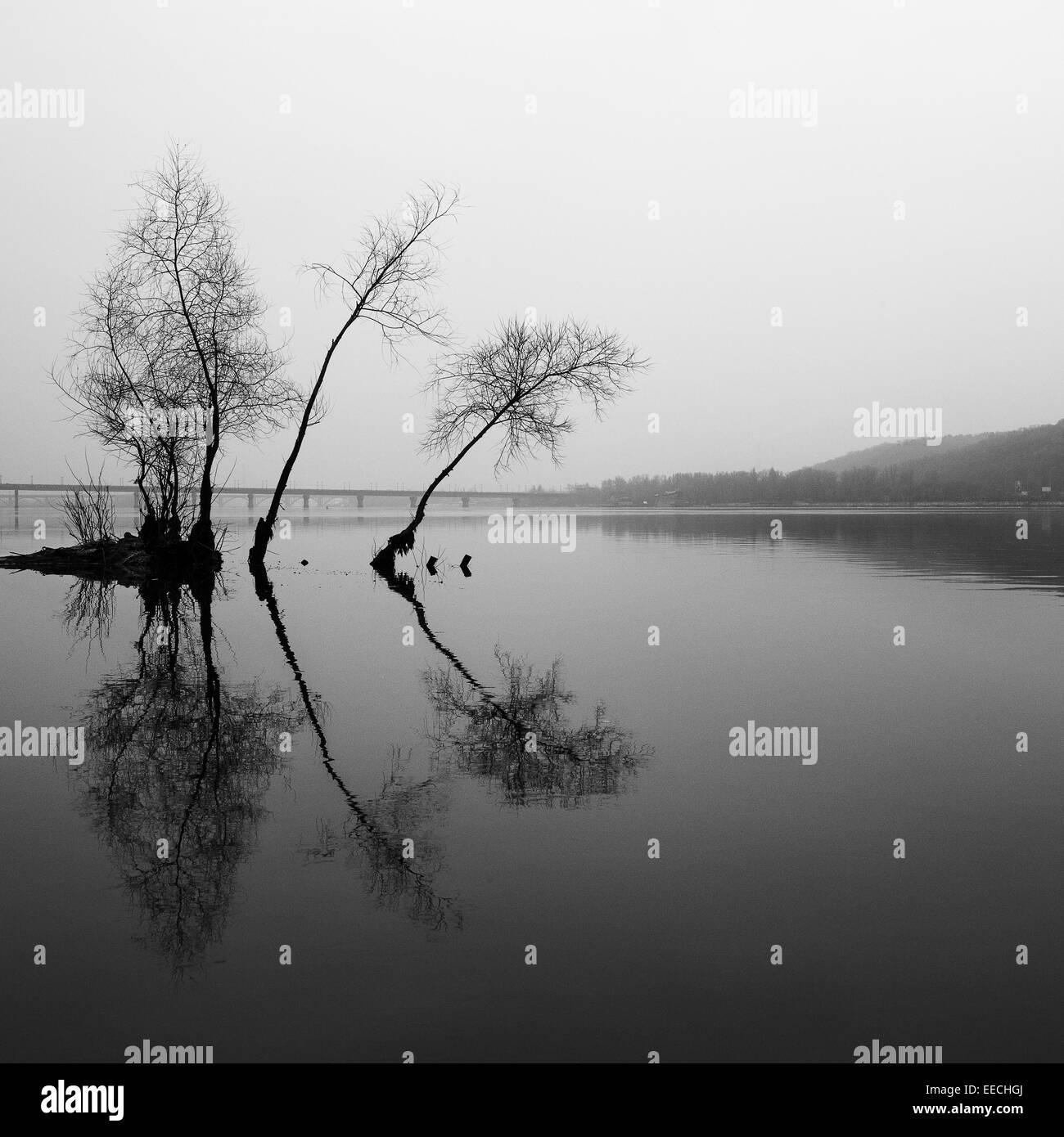 Paesaggi, nero, riflessione, bianco, speculare, acqua, natura, pattern, alberi, piante, lago Immagini Stock