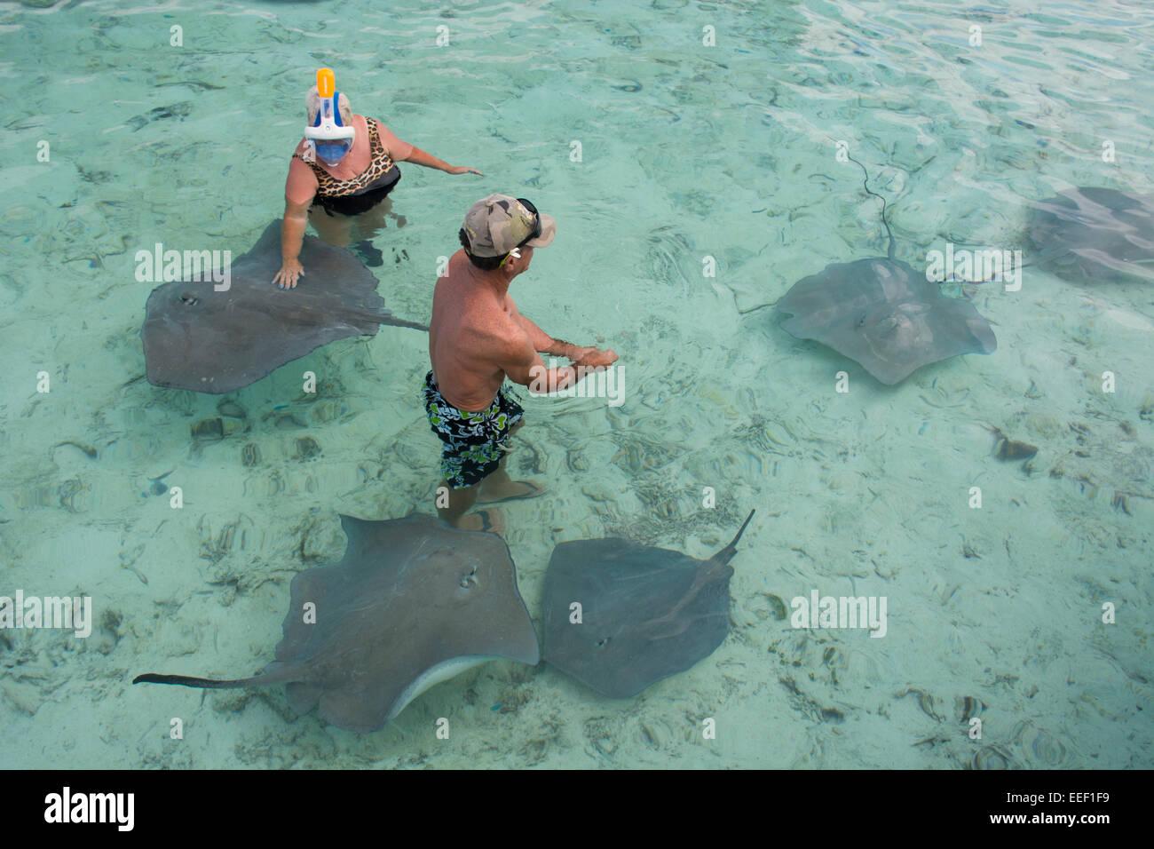 Snorkeling bora bora immagini snorkeling bora bora fotos - Bagno con gli squali sudafrica ...