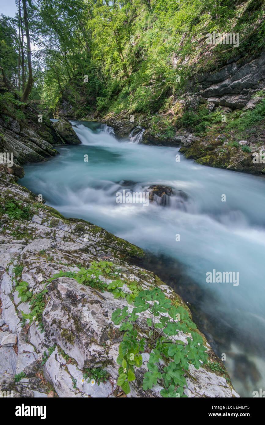 Vista offuscata di rocky creek in foresta Foto Stock