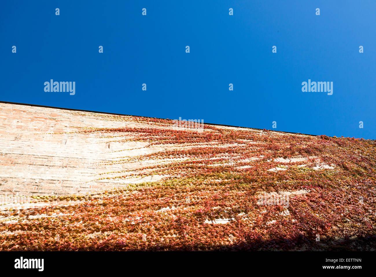 Dettagli e linee della parete di edera nel cielo blu. Venezia, Veneto. Italia Foto Stock