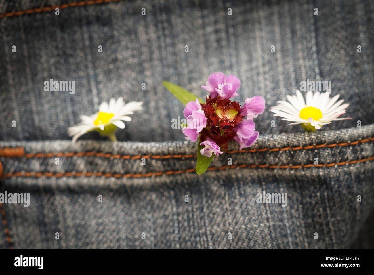 Concetto, fiori in una tasca dei pantaloni di jean Immagini Stock