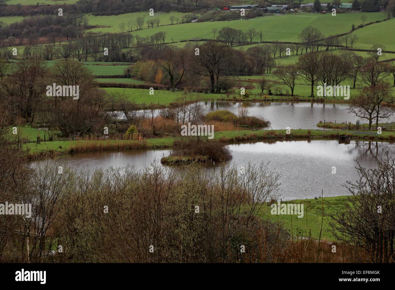 Campo inondato, Carmarthenshire, Galles Immagini Stock