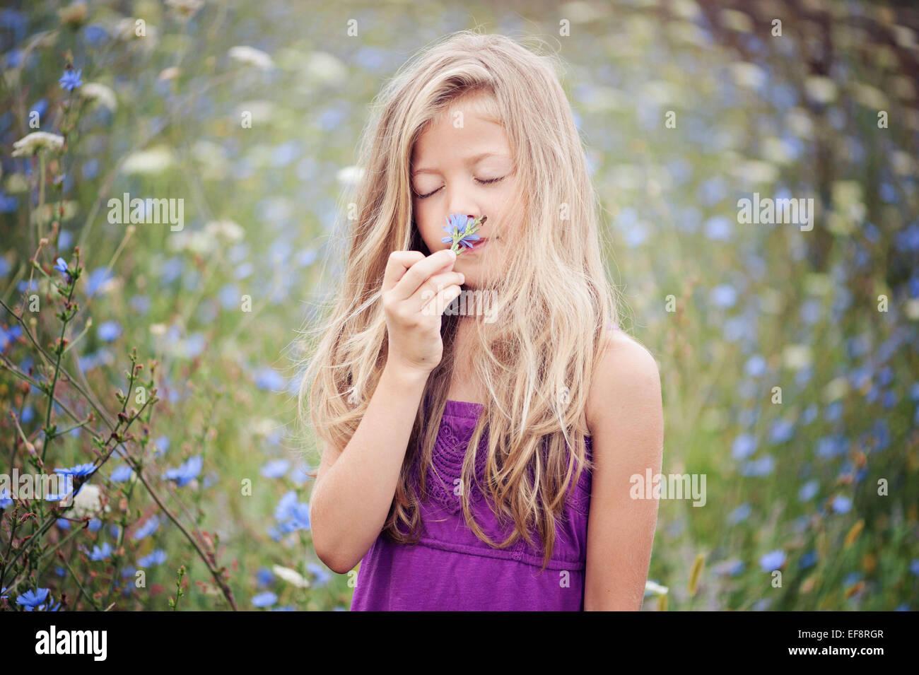Ritratto di giovane ragazza odore di fiore (6-7) nel campo di cicoria Immagini Stock