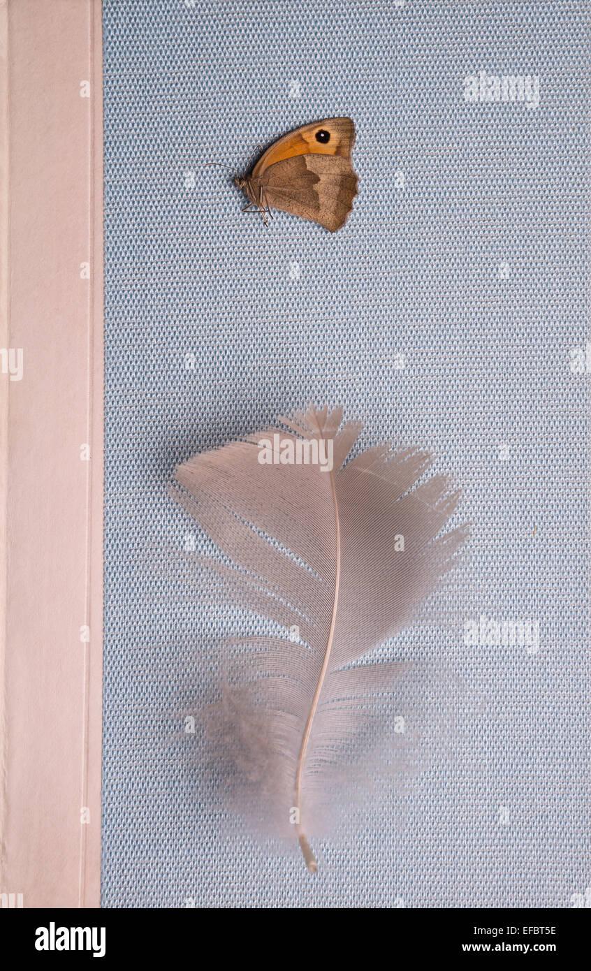 La piuma e la farfalla su un libro Immagini Stock