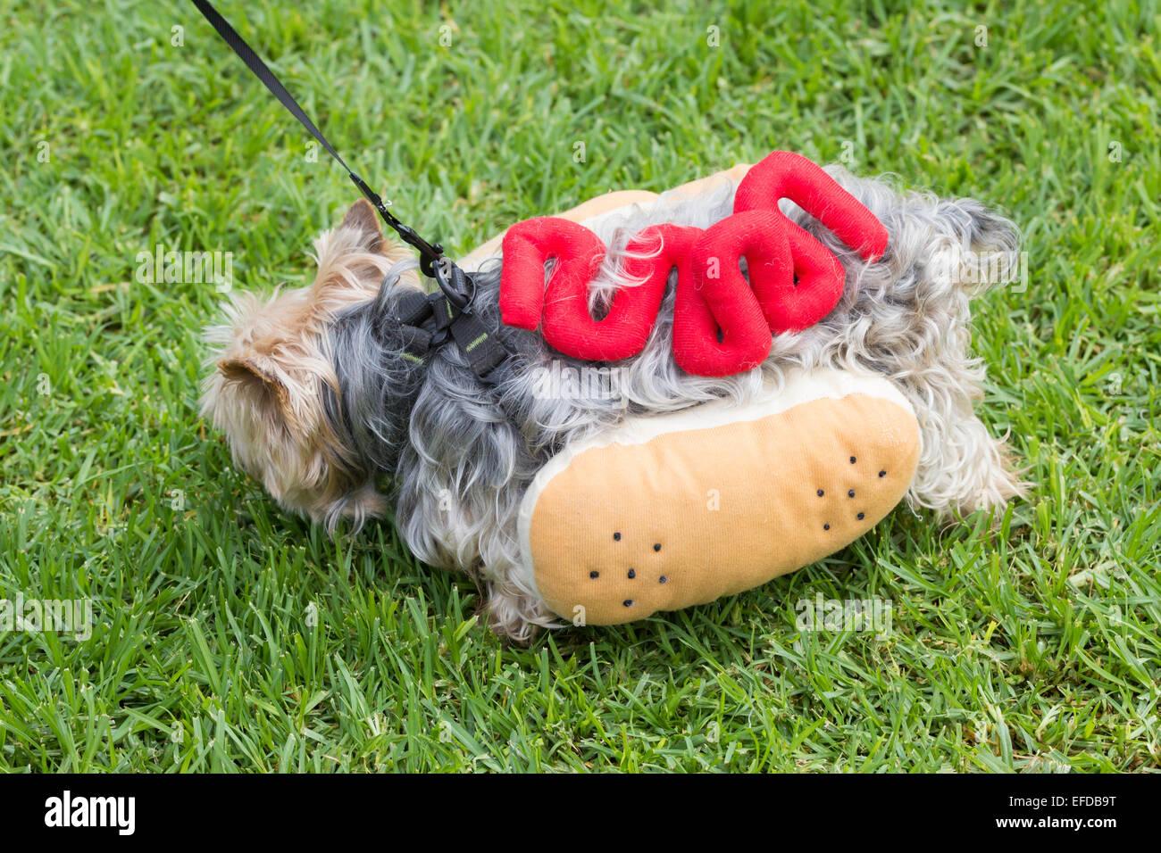 Yorkshire Terrier Vestito Come Hot Dog A Dog Fancy Dress Giorno A