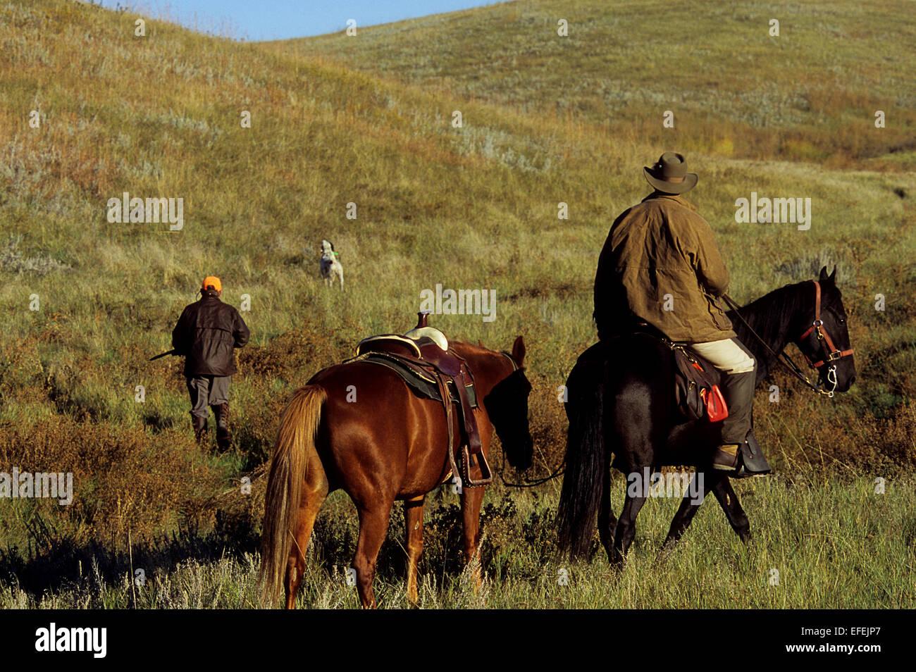 Gallo cedrone cacciatori a cavallo durante la caccia a cavallo con cani nella prateria vicino a Pierre Dakota del Immagini Stock