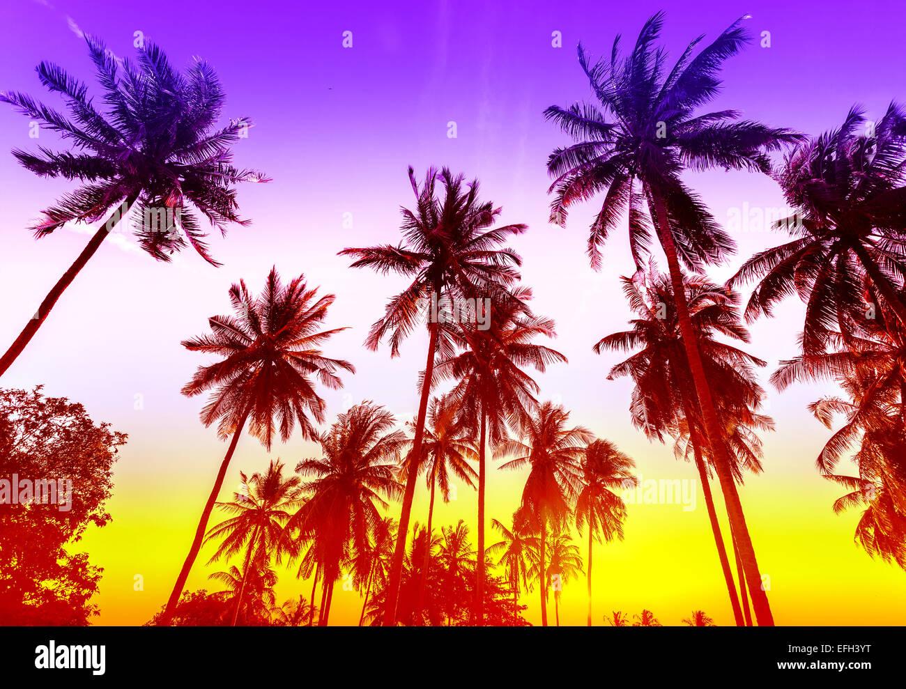 Palme sagome sulla spiaggia tropicale al tramonto. Immagini Stock