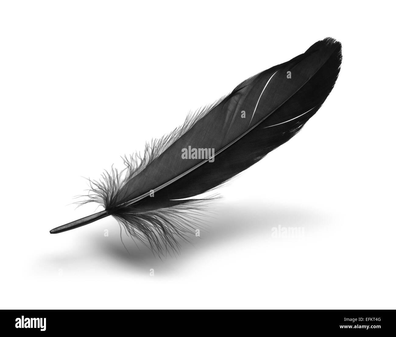 Singola nera piuma flottante isolato su sfondo bianco. Immagini Stock