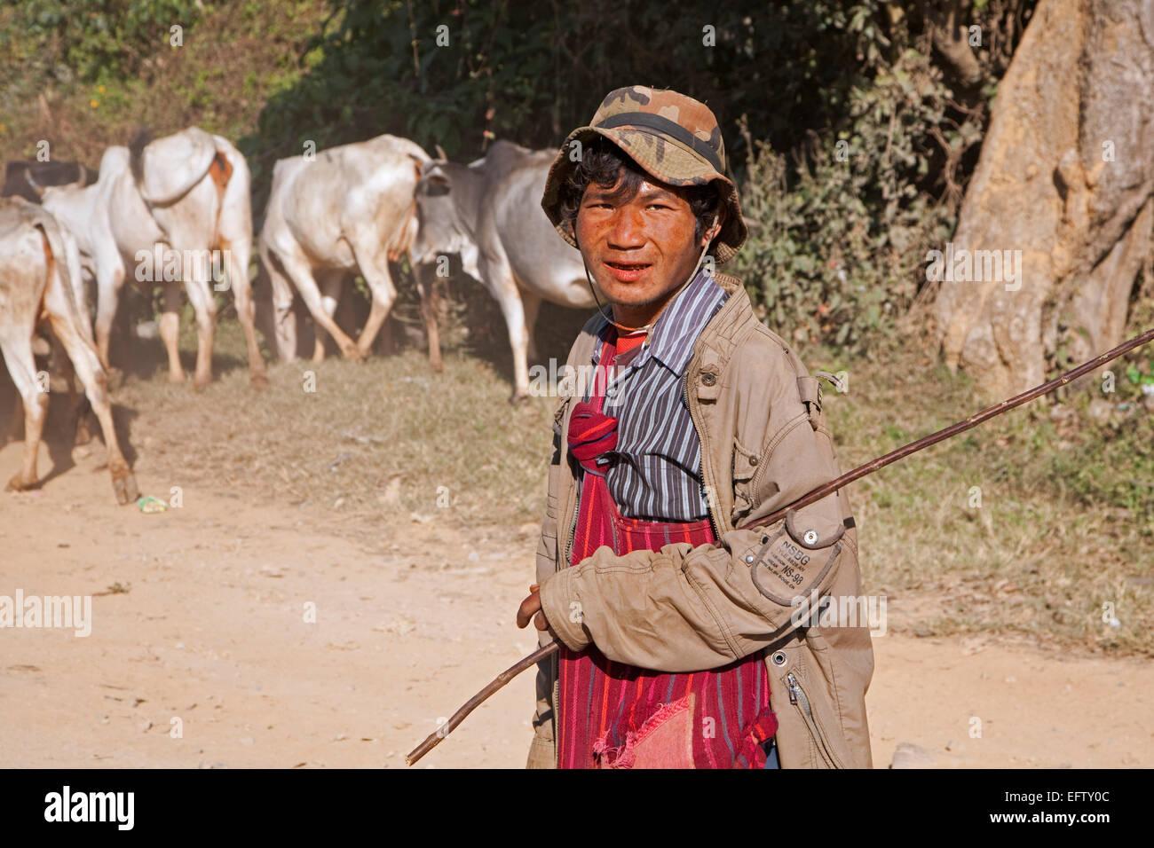 Herder birmano imbrancandosi vacche lungo la strada, Taunggyi distretto, Stato Shan, Myanmar / Birmania Immagini Stock