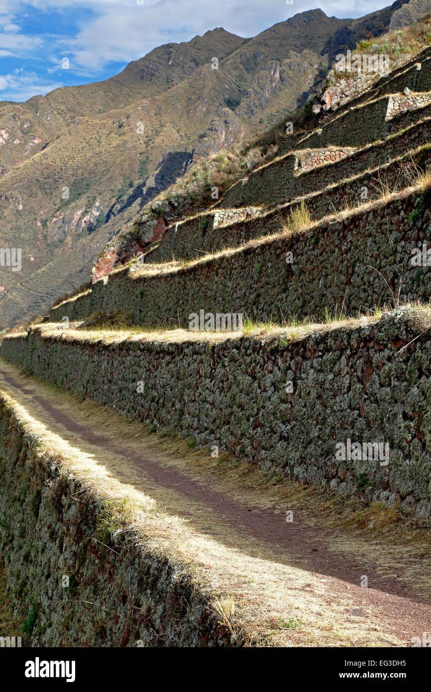 Terrazzamenti agricoli, Pisac rovine Inca, Pisac, Cusco, Perù Immagini Stock