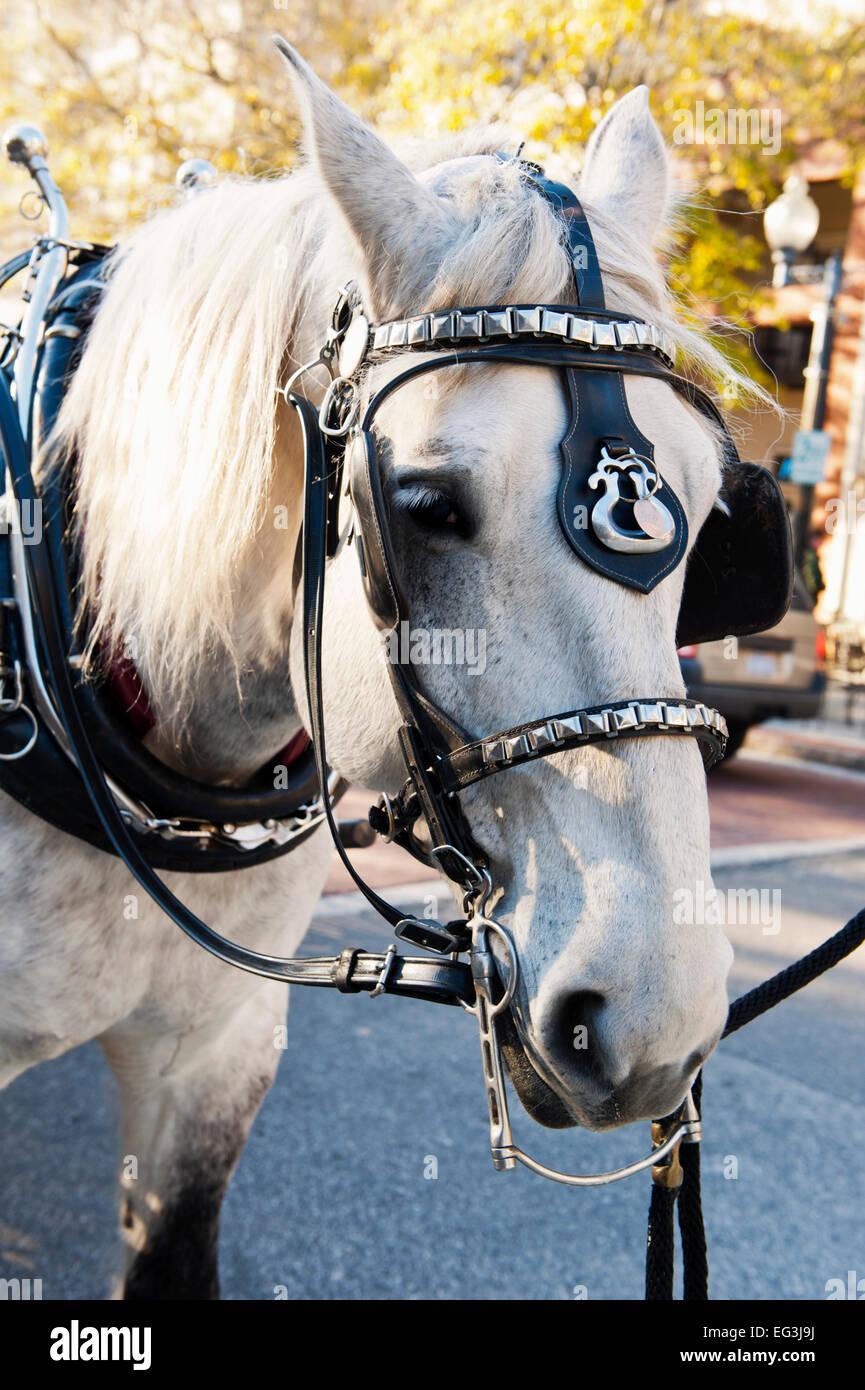 Carro trainato da cavalli, Market Street, Wilmington, Carolina del Nord Immagini Stock