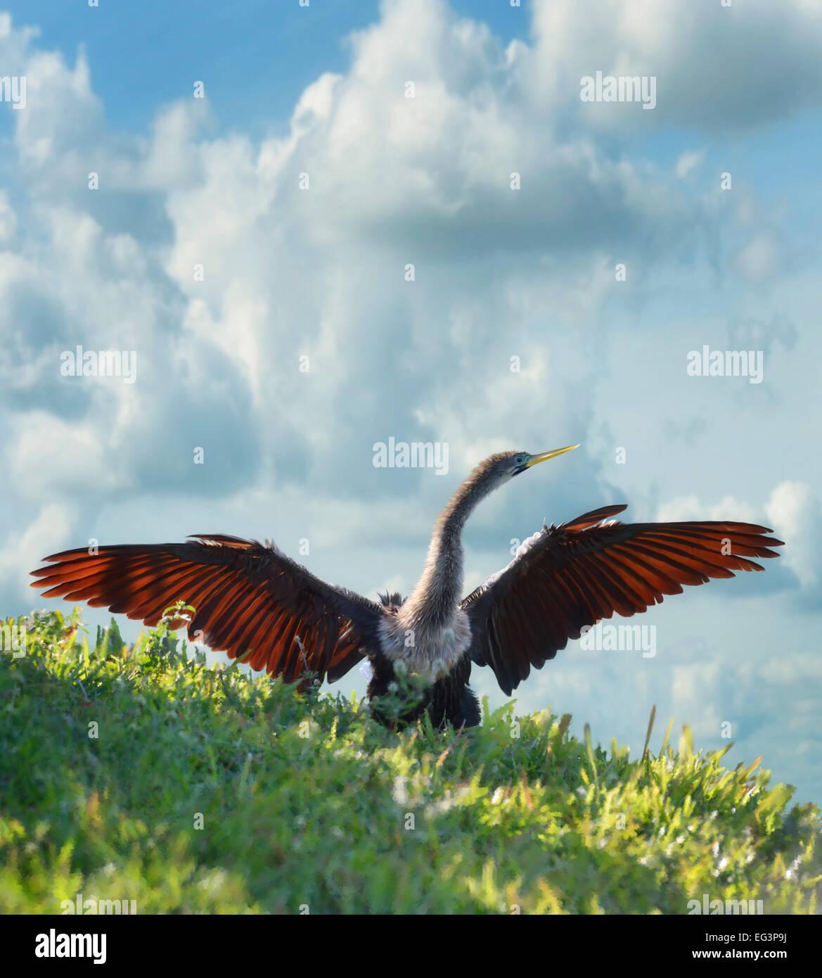 La pittura digitale di American Anhinga Immagini Stock