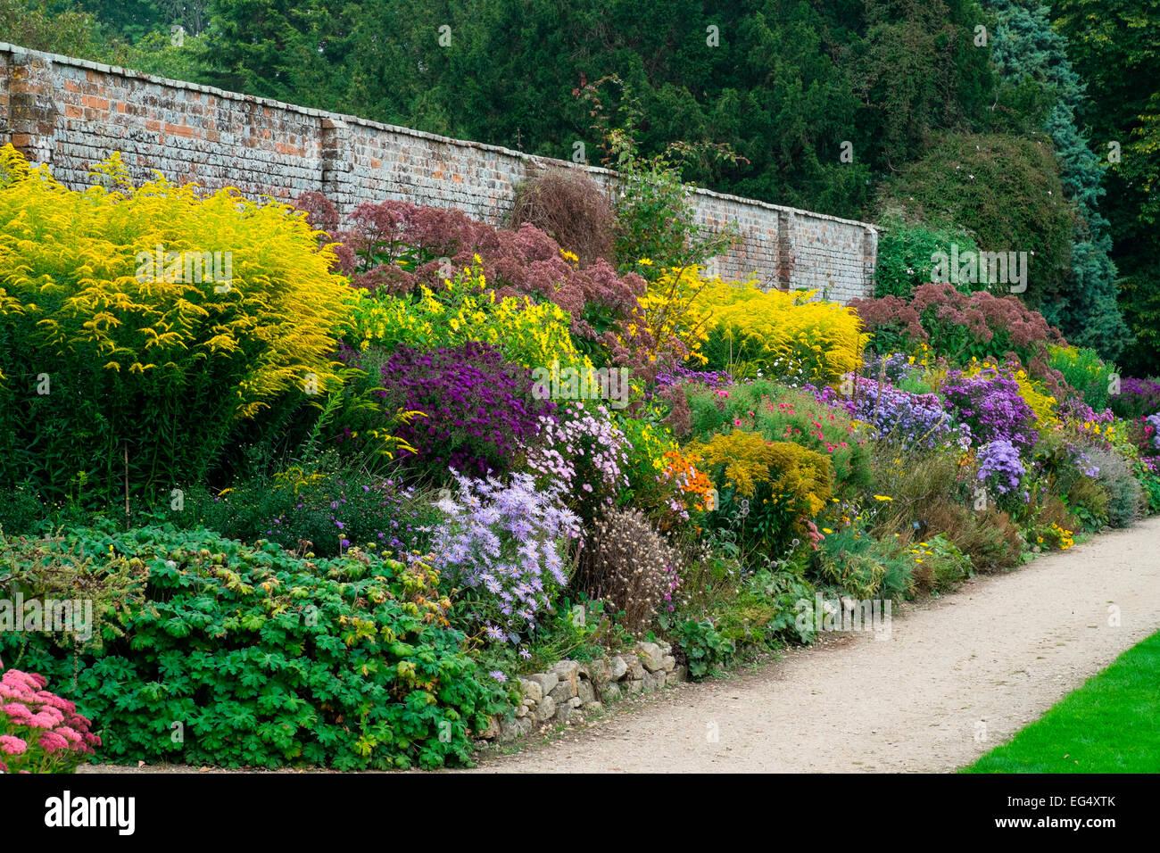 Variet di piante da fiore e arbusti in piante erbacee for Piante e giardini