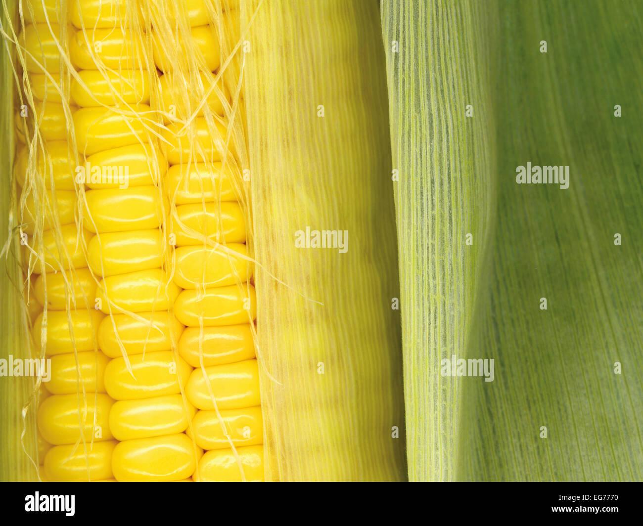 Gli sfondi di raccolto: Mais di cop Immagini Stock