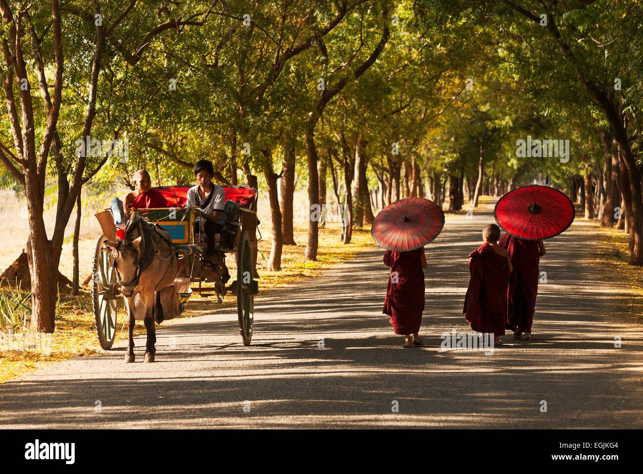 I giovani monaci buddisti e un carrello di giovenco omn una strada a Bagan, Myanmar ( Birmania ), Asia Immagini Stock
