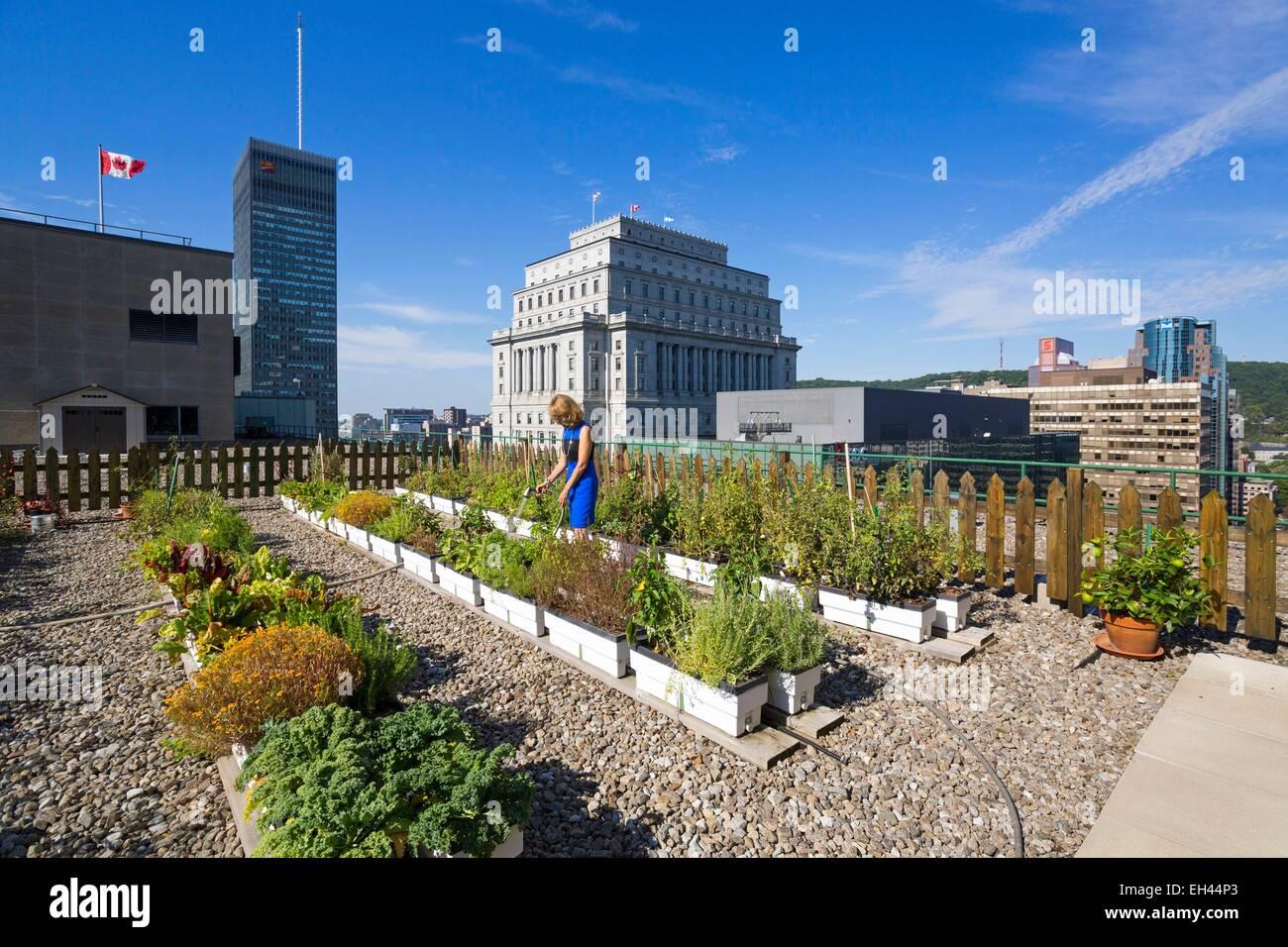 Canada, Provincia di Quebec, Montreal, Queen Elizabeth Hotel, il tetto verde e il suo giardino vegetale Immagini Stock