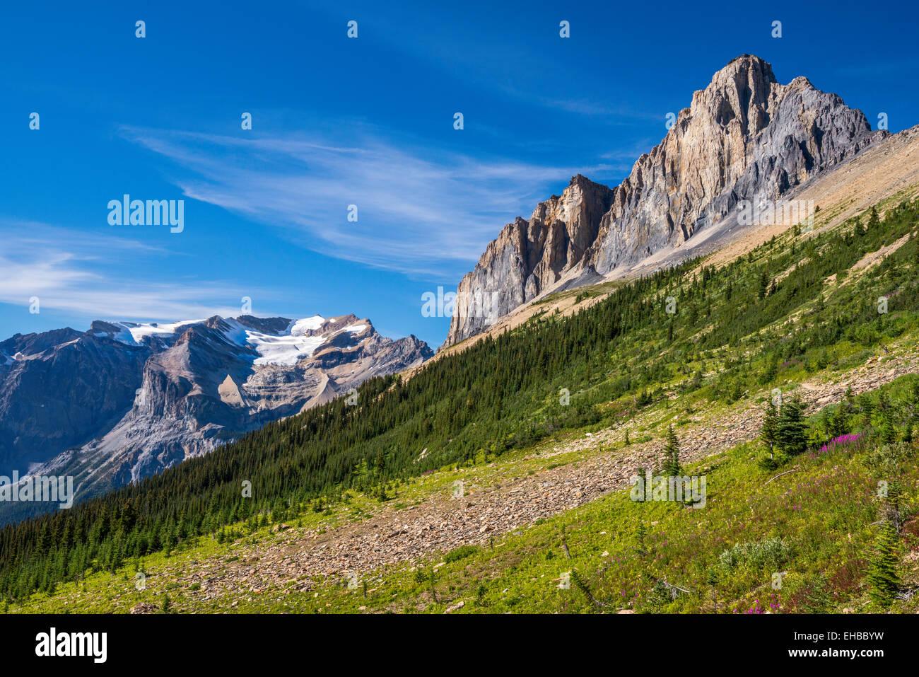 Wapta Mountain, Presidente della gamma, vista da Burgess Highline Trail, Canadian Rockies, Yoho Parco Nat, British Immagini Stock