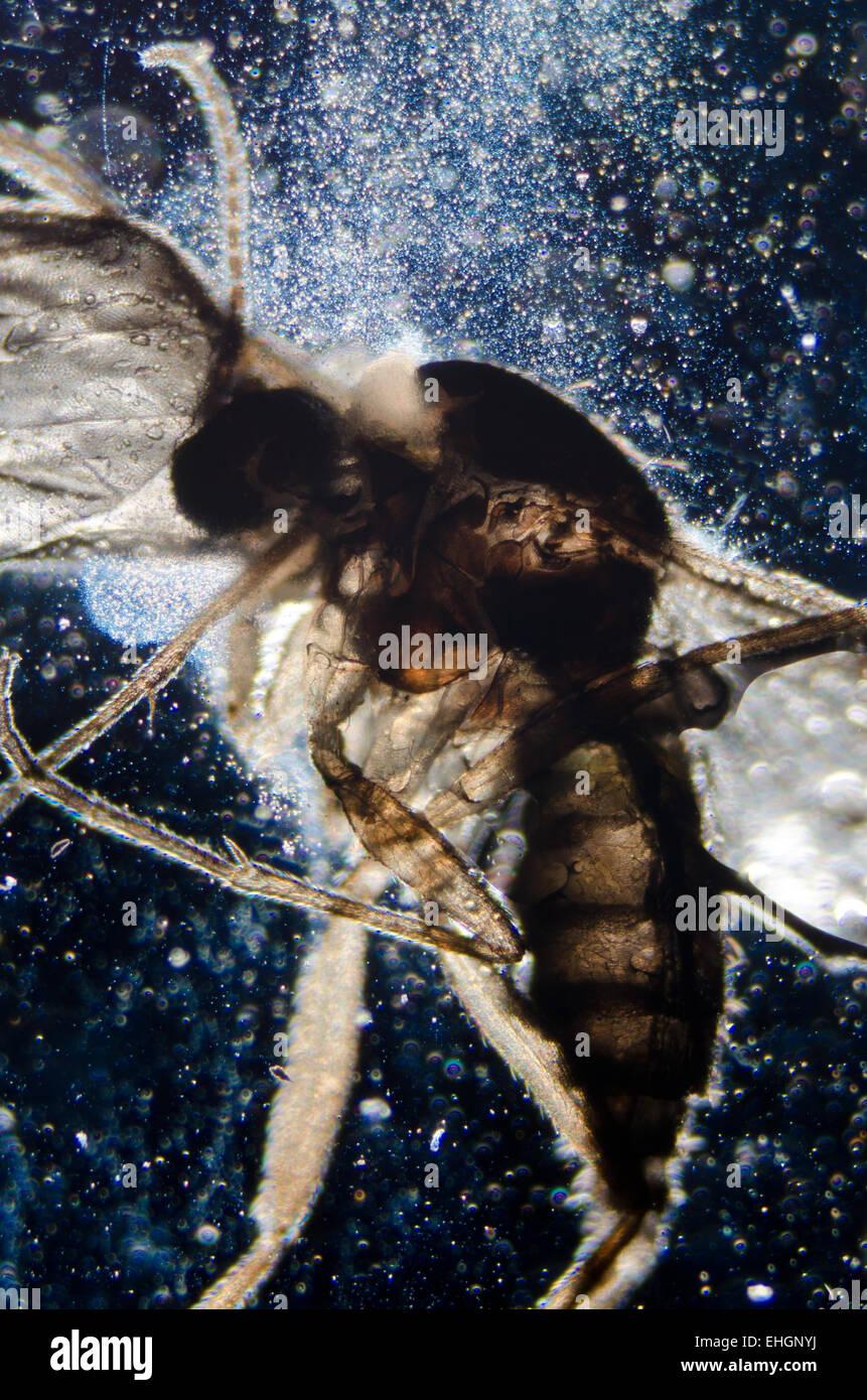 La scienza di microscopia insetto animale Immagini Stock