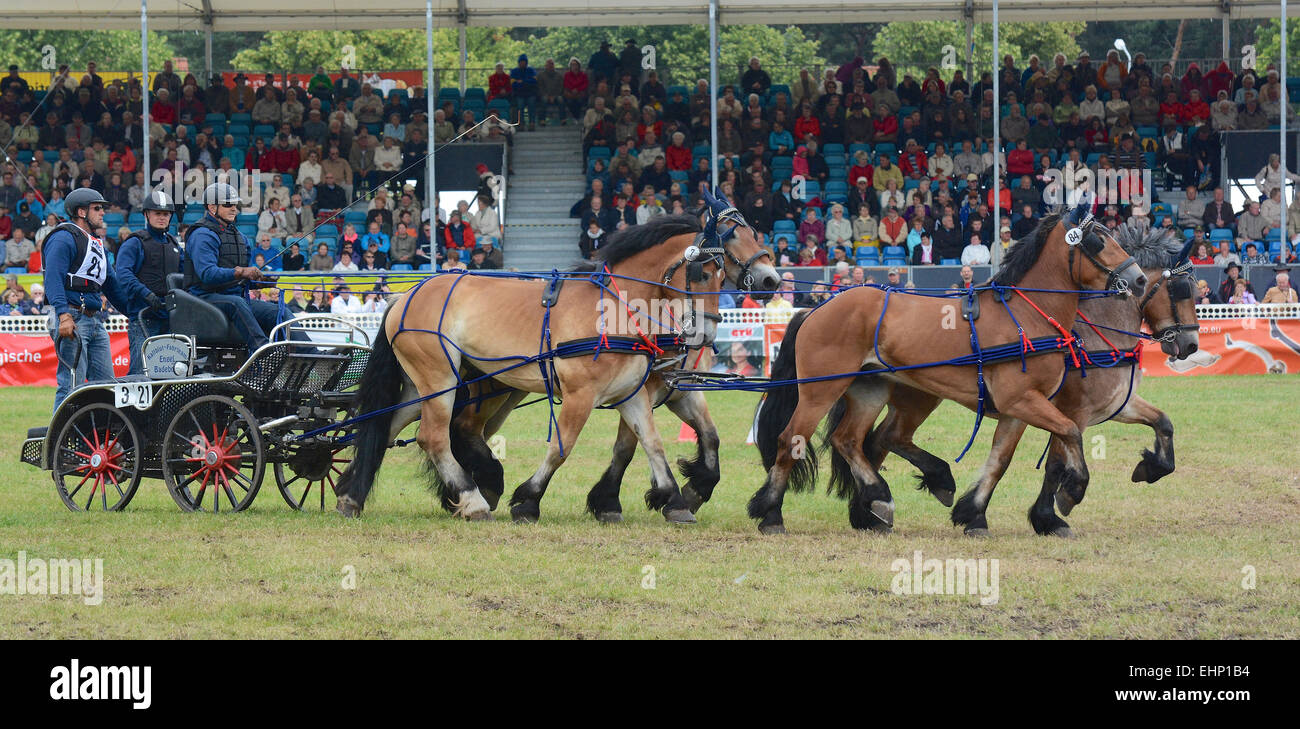 Gli europei più grande progetto horse show Foto Stock
