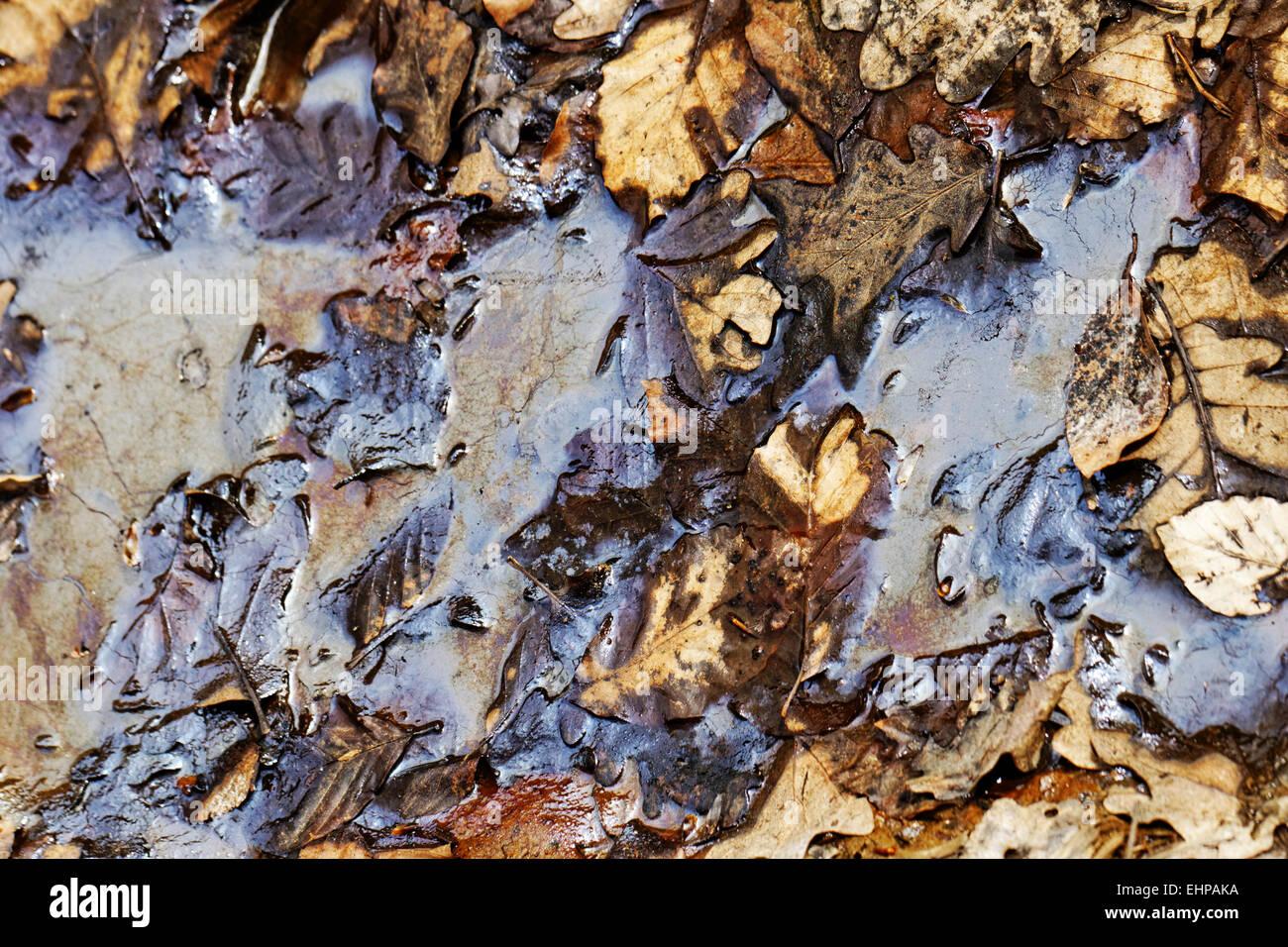 Inquinamento da petrolio su terreni forestali Immagini Stock