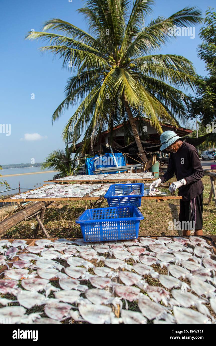 La pesca in Thailandia, ASIA DU SUD-EST Immagini Stock