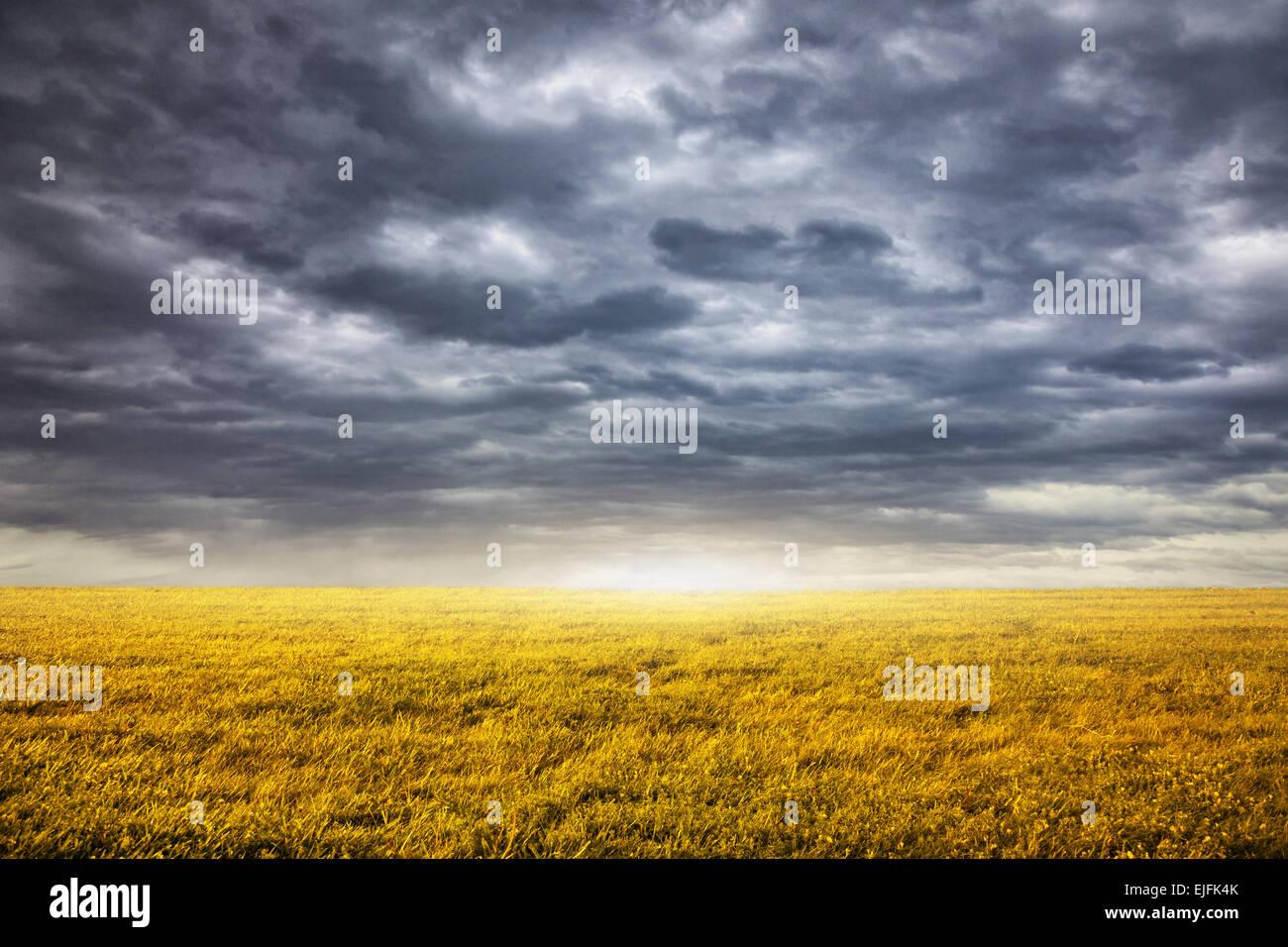 Campo con erba gialla a nuvoloso drammatico sfondo cielo Immagini Stock