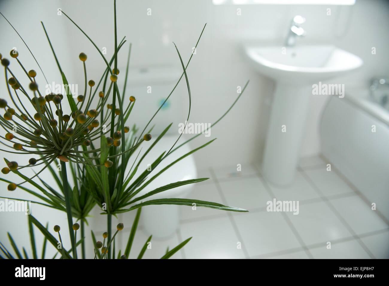 Pianta di casa stanza da bagno suite bianca bagno lavandino chrome