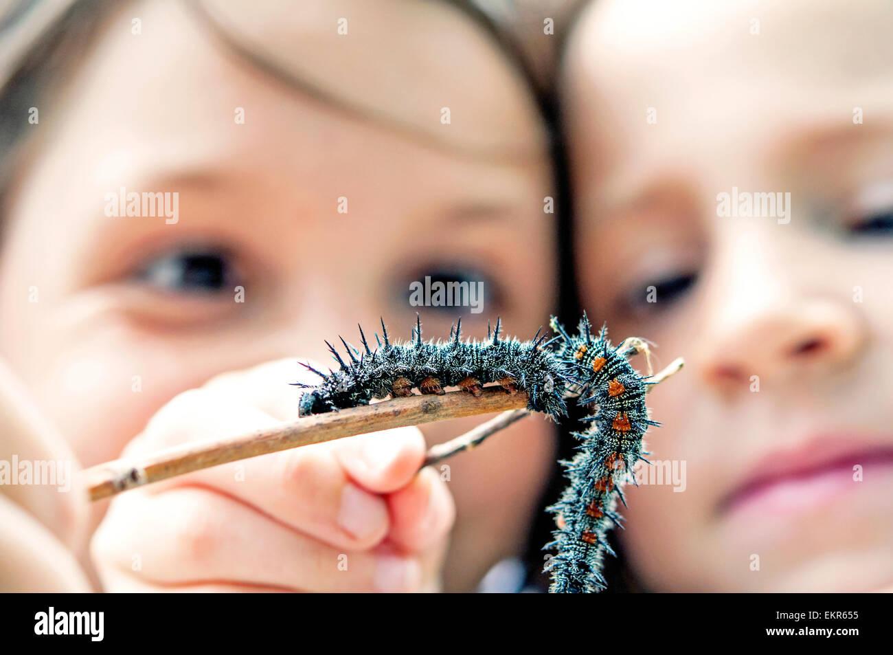 Bambini esaminare worm su un ramo Immagini Stock