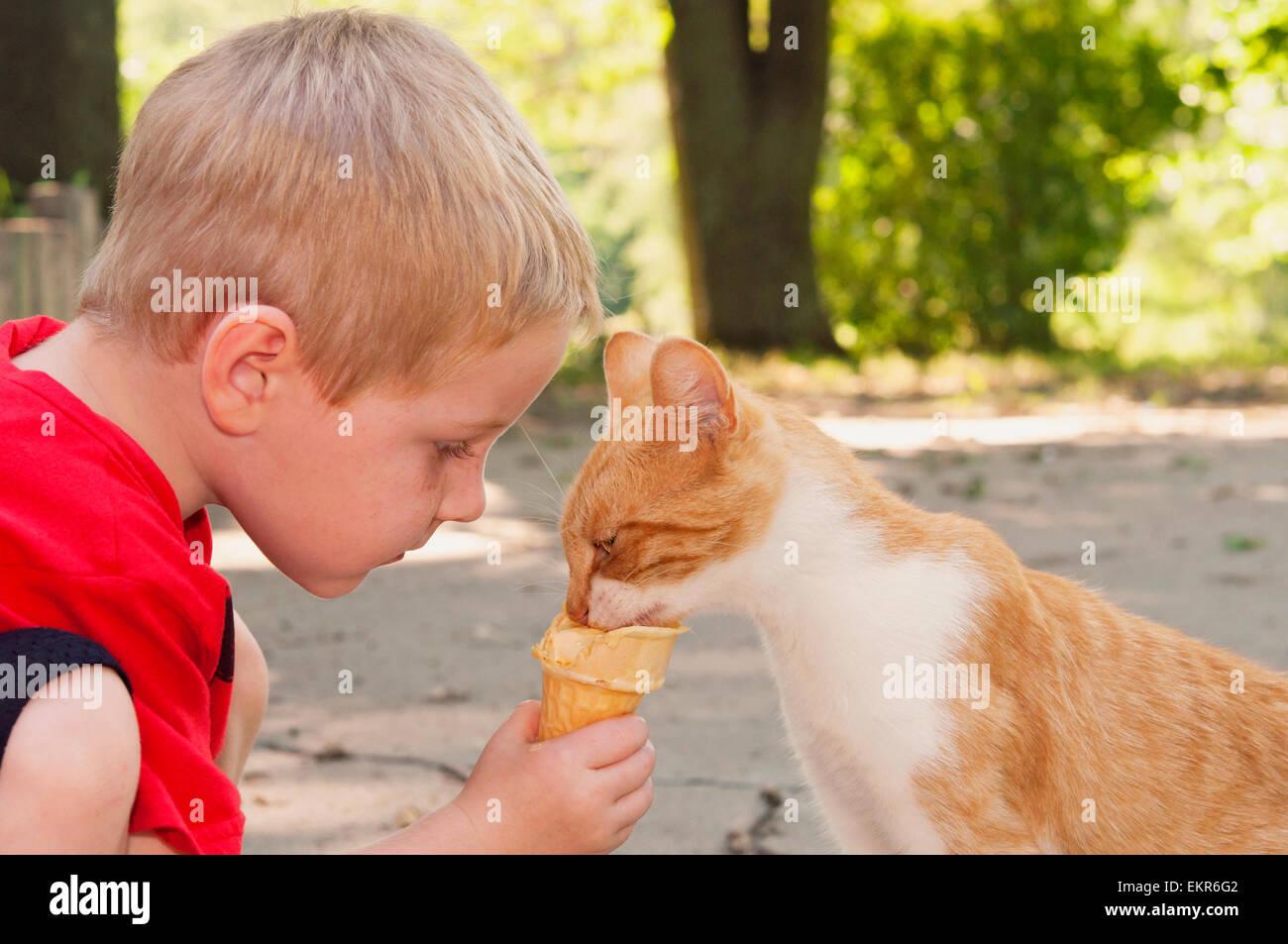 Alimentazione bambino gatto il suo cono gelato Immagini Stock