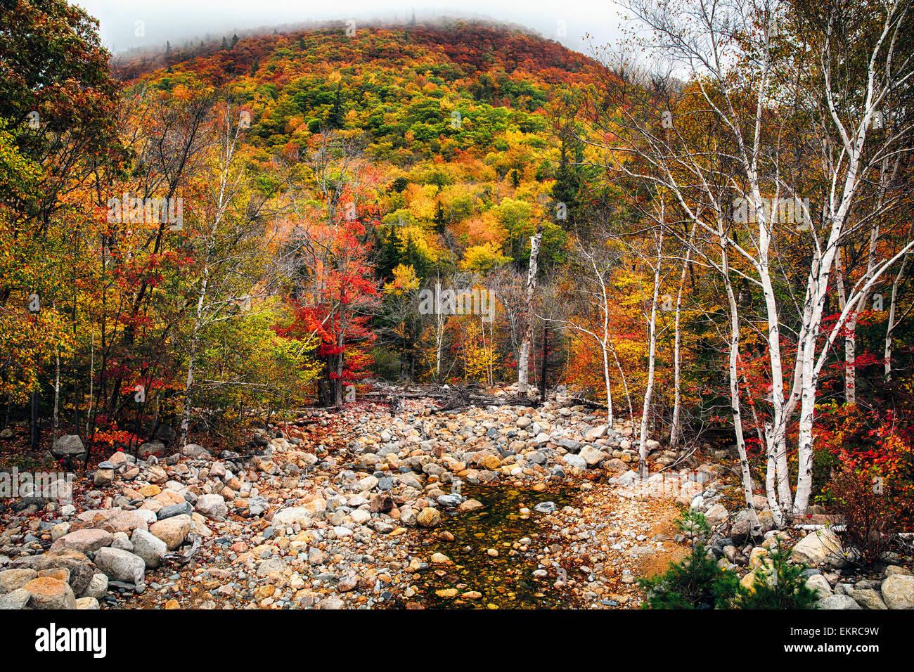 Basso angolo vista di una montagna nella nebbia e un Dry Creek a caduta, White Mountains National Forest, New Hampshire Foto Stock