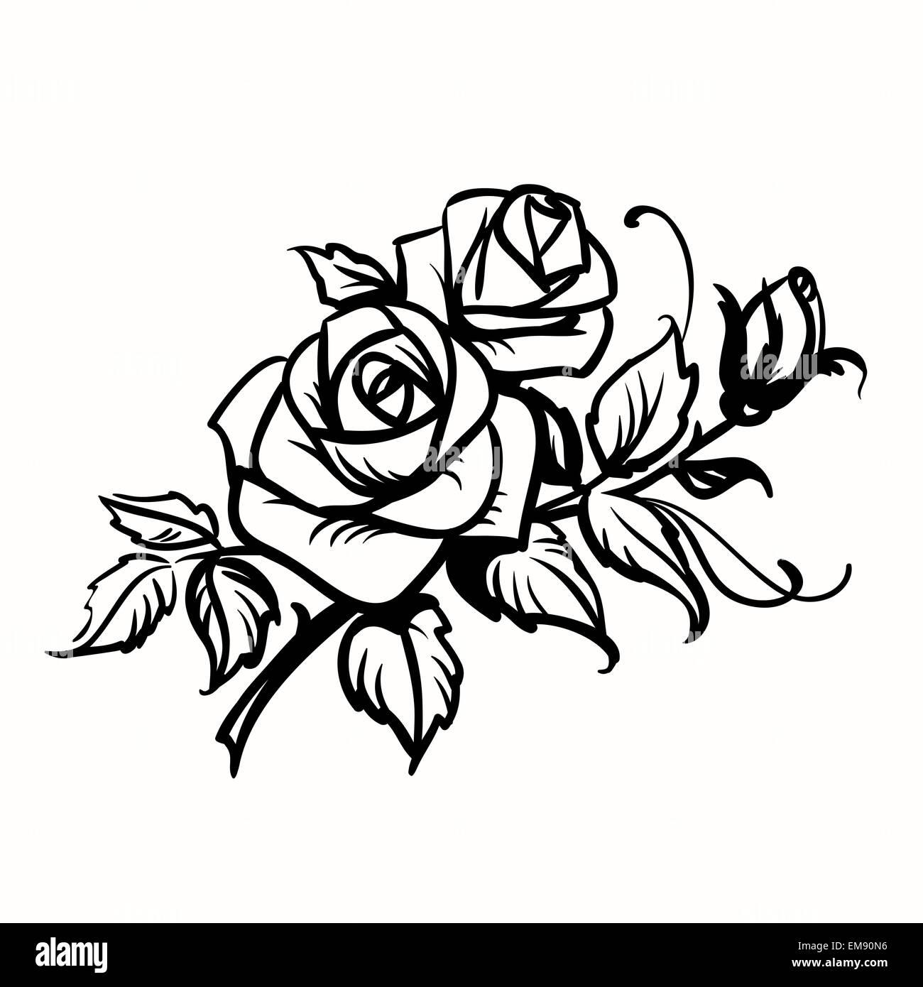 Le Rose Contorno Nero Disegno Su Sfondo Bianco Illustrazione