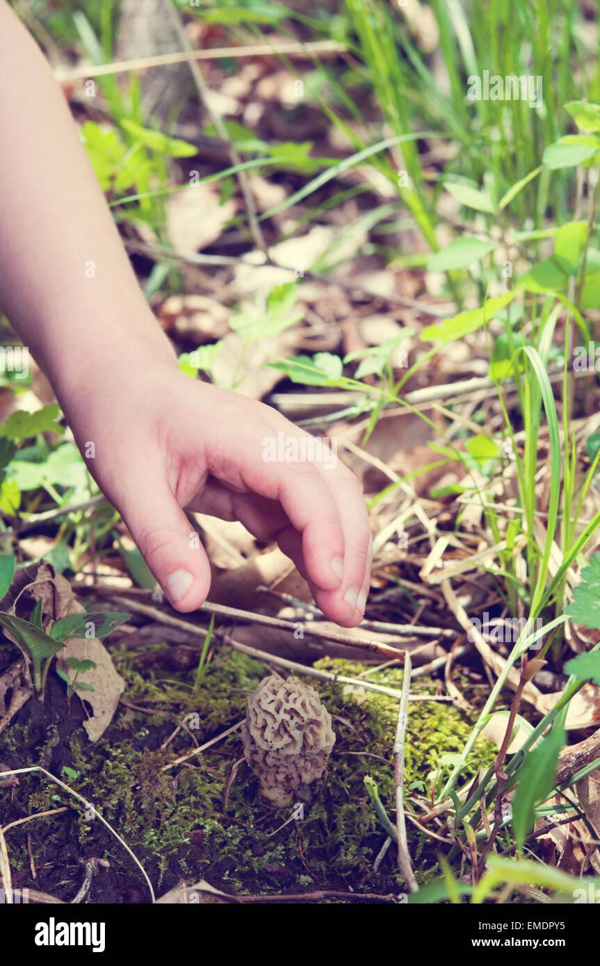 La caccia di funghi Morel Immagini Stock