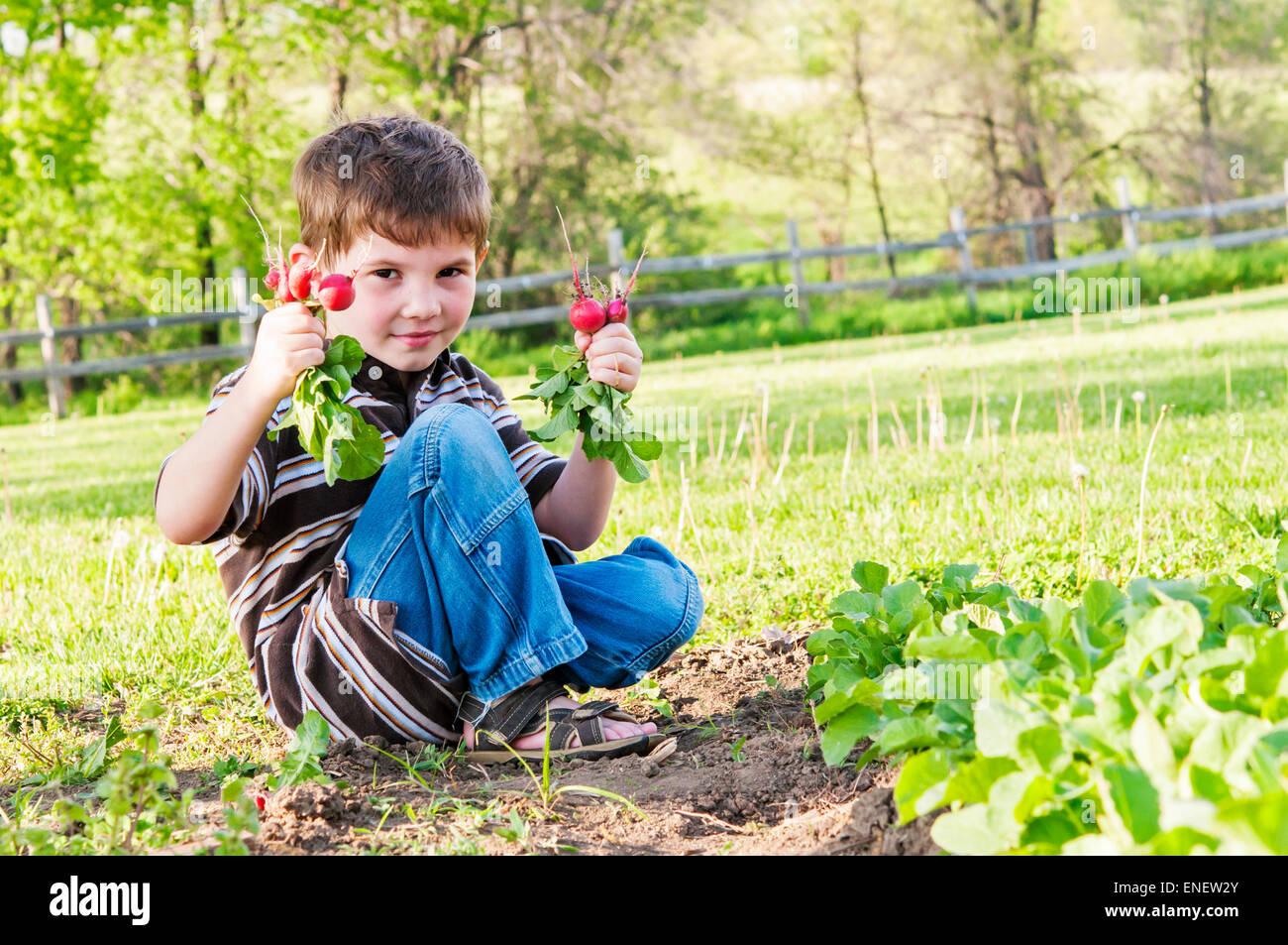 Ragazzo holding ravanelli tirato da giardino Immagini Stock